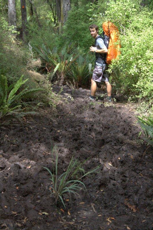 Muddy Section on Rakiura Track