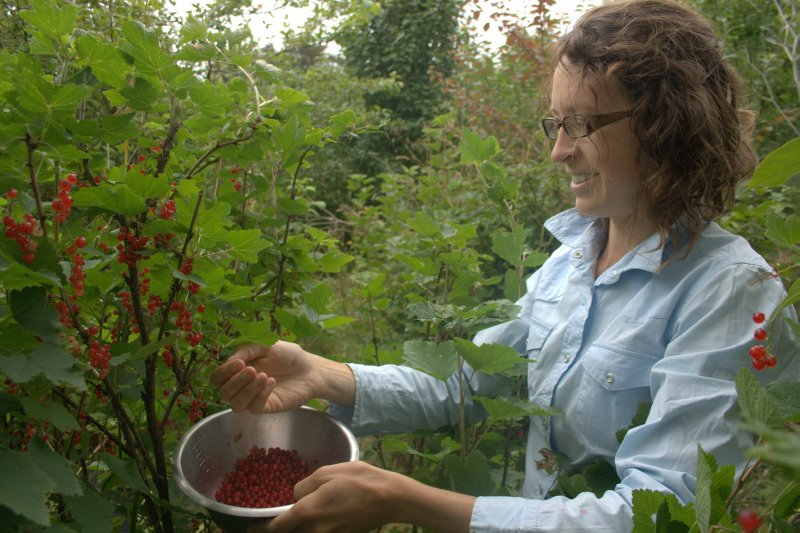 Picking Red Currants in the Food Forest
