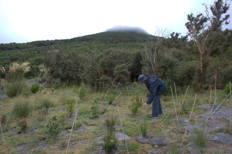 Native Tree Planting at Orokonui Eco Sanctuary