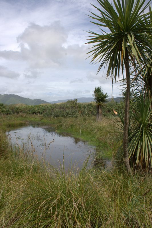 Waikanae Wetland Restoration by John Topliff