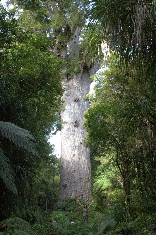 Tane Mahuta (Giant Kauri)