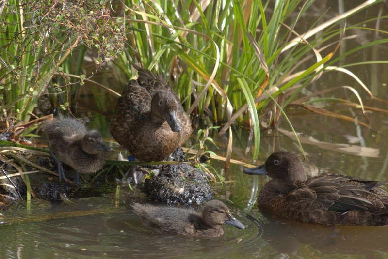Brown Teal Family