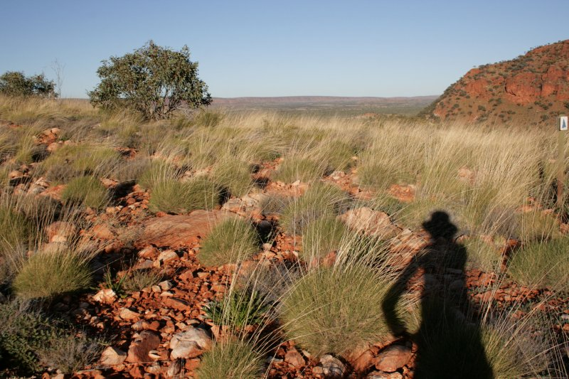 Julie's Shadow on Spinifex Grasses