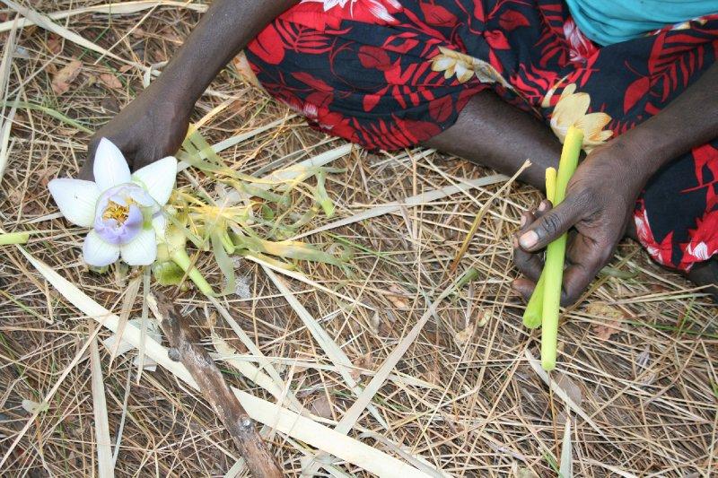Preparing Water Lilies to Eat