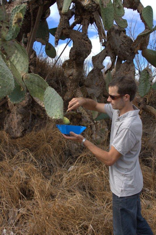 Cactus Harvesting