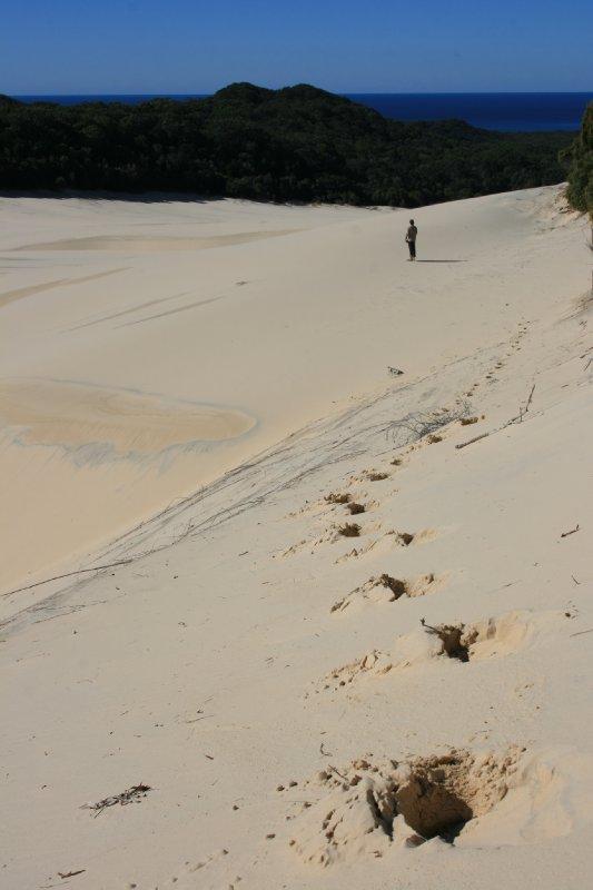 Footprints in Wongi Sandblow
