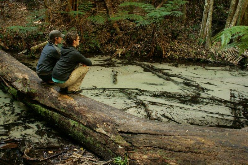 Clear Water of Wanggoolba Creek in Fraser Island Rainforest
