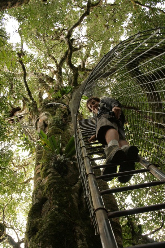 Heading Up into the Canopy