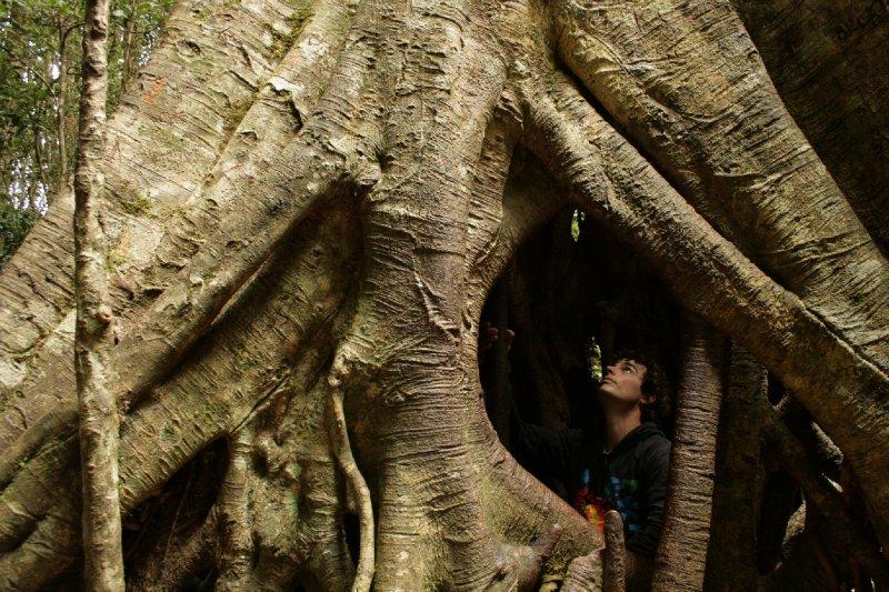 Inside Strangler Fig