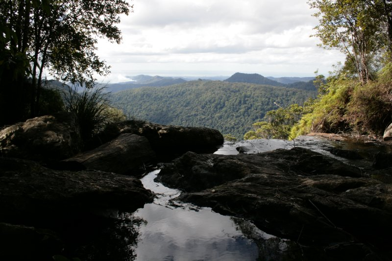 View from Twin Falls Circuit in Springbrook NP