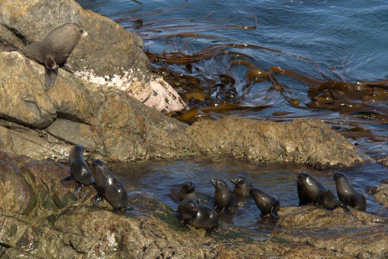 Baby Seals at Ohau Point Seal Colony