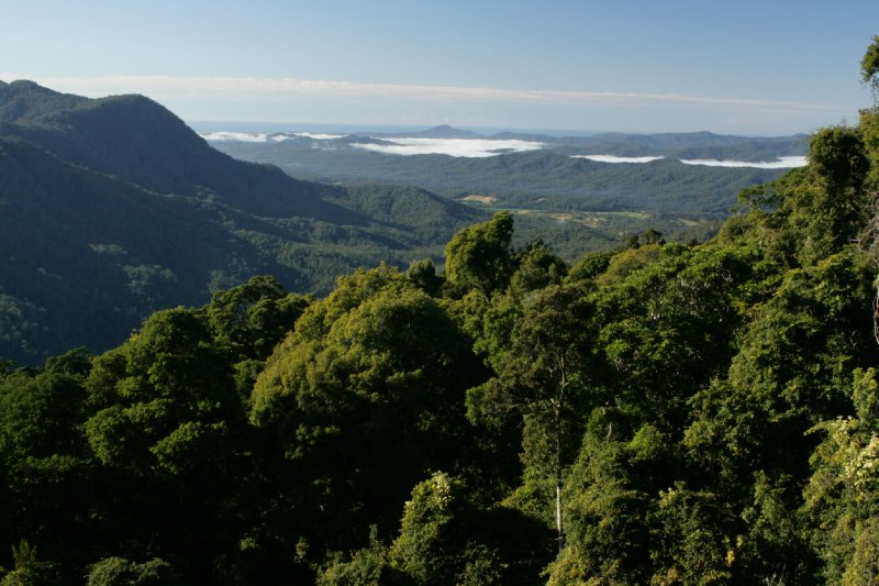 View from The Skywalk in Dorrigo NP