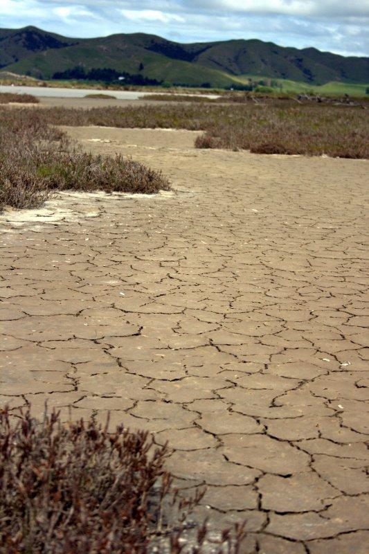 Mudflats at Wairau Lagoon Wetland Reserve