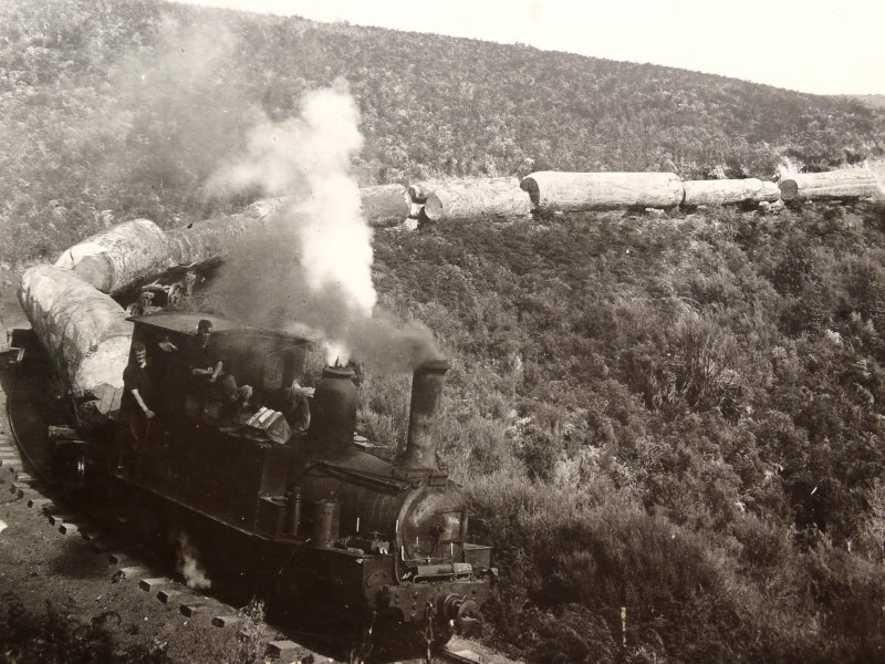 Old Picture of Kauri Log Train
