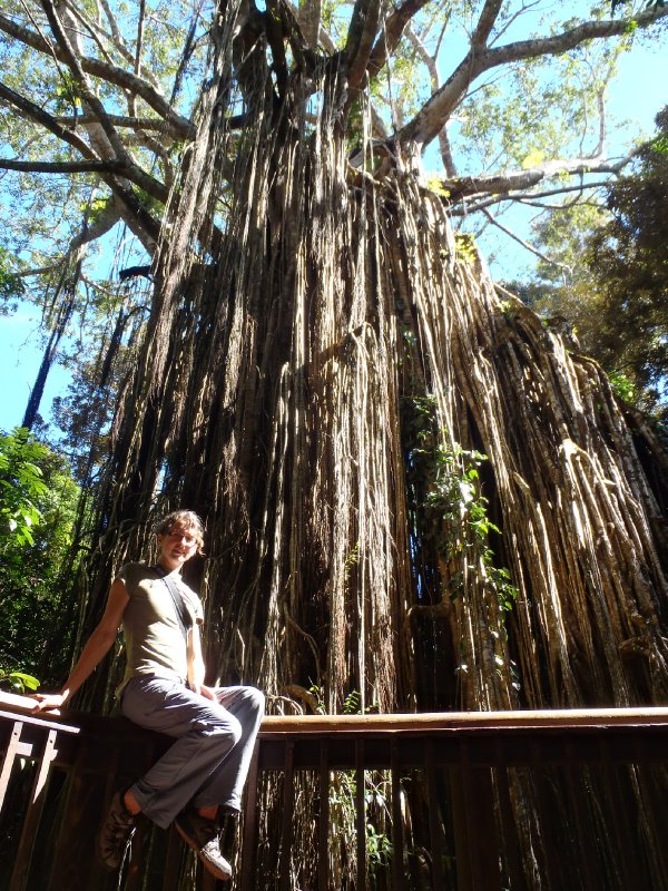 Julie at The Curtain Fig