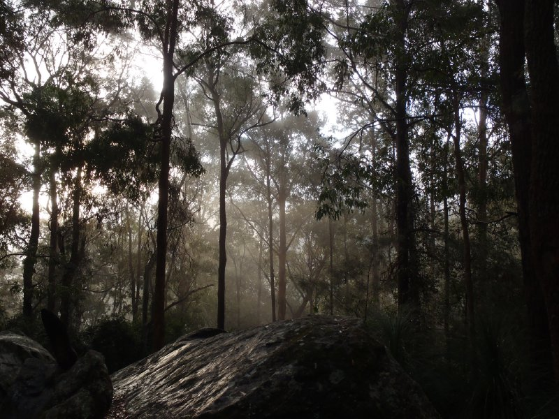 Misty Morning in Watagans NP