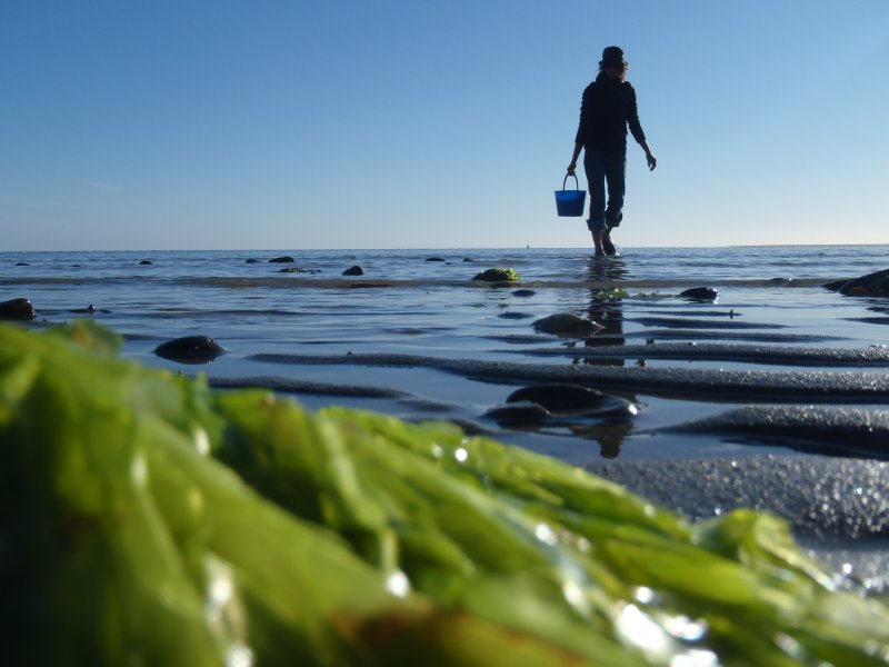 Julie Collecting Seaweed