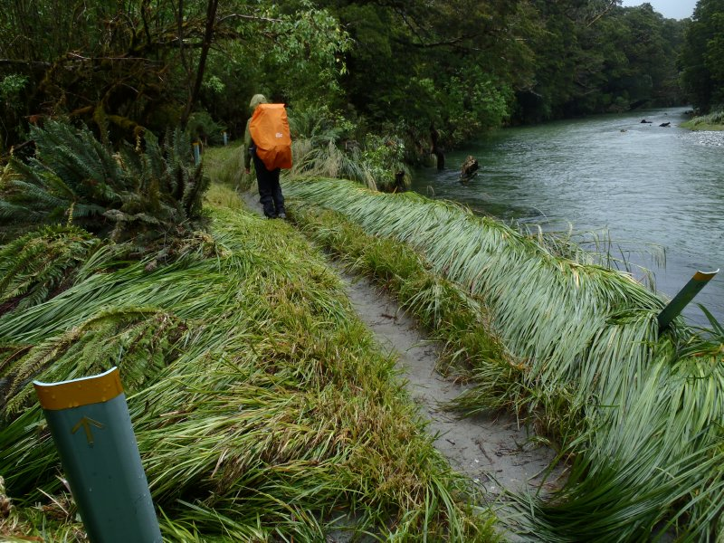 Evidence of Raging Rivers along Milford Track