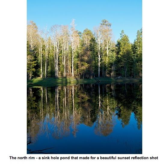 Beautiful Pond Reflection