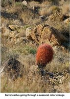 joshuatree..alpark4.jpg