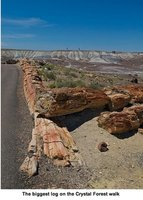 petrifiedforest1.jpg
