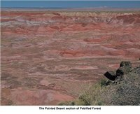 petrifiedforest4.jpg