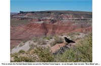 petrifiedforest5.jpg