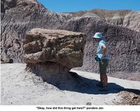 petrifiedforest6.jpg