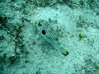 1_12799067..er-fish.jpg