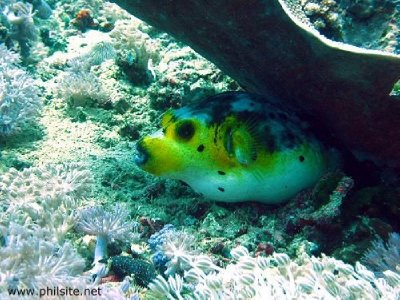 underwater..er-fish.jpg