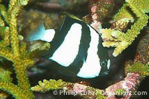 white-tail..h-07901.jpg
