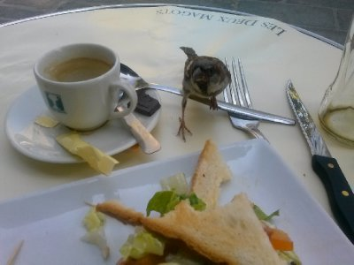 My lunch buddy at Les Deux Magots