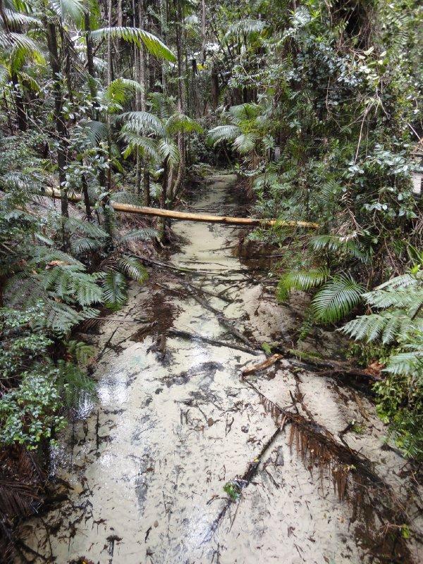 Regenwoud Fraser Island