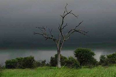 Storm over Veld