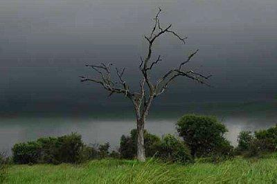 Storm over Veld