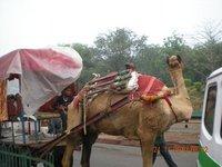 India_blog1_032.jpg