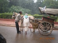 India_blog1_035.jpg