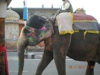 India_blog1_144.jpg