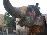 India_blog1_219.jpg