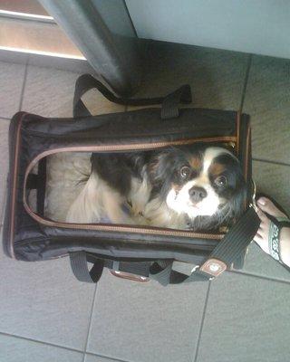 Finn is ready to go!