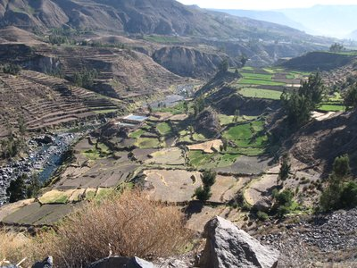 In the Colca Canyon
