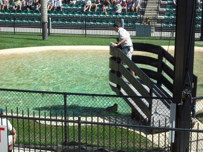 Croc at Australia Zoo