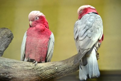 We clearly bored the Galahs!