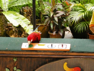 A clever macaw puts shaped blocks in the correct positions in the Bird Show
