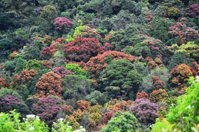 The beautiful coloured trees on the way down Adam's Peak