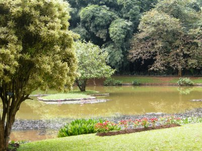 The Lake in the Peredeniya Botanical Gardens