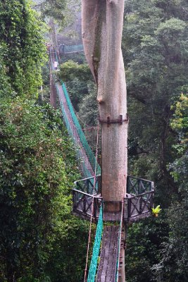 The canopy walk stretched for 300m