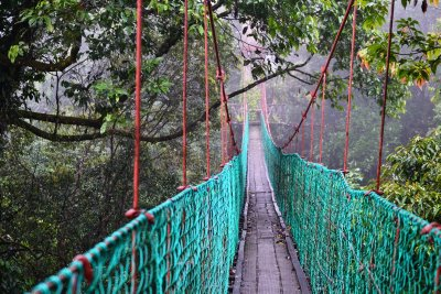 The long, magnificent canopy walk in Danum Valley