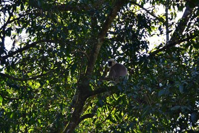 Monkey business in Chitwan National Park