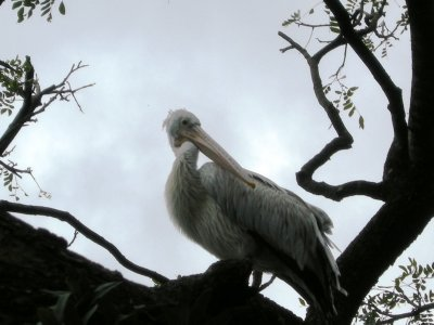 Stork up in a tree !!
